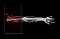 Лечение артрита долгое время было под рукой