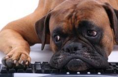 Собаки чуют гипогликемию лучше любых приборов