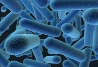 Датскими учеными собраны неотразимые комбинации антибиотиков