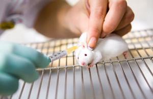 Тау-антитела могут быть основой лечения болезни Альцгеймера