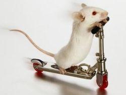 Японцам удалось вылечить мышь от паралича