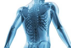 Тело человека хранит в себе ключ к избавлению от костных болезней