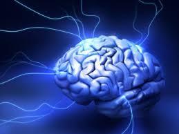 Место возникновения страха в мозга остается под вопросом
