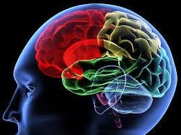 Учеба меняет мозг на молекулярном уровне