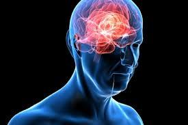 Учеными найден способ защиты мозга от повреждений при инсульте