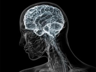 Нервные клетки восстанавливаются, доказали ученые