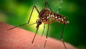 Экологическая инженерия поможет в борьбе с малярией
