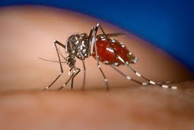 В странах Карибского бассейна лихорадкой чукунгунья заболели более 264 тыс. человек