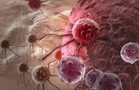 Между старением, стволовыми клетками и раком существует связь