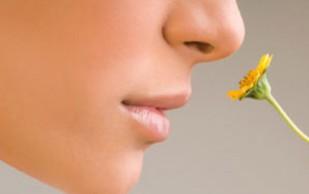 Почему жирная пища ухудшает обоняние