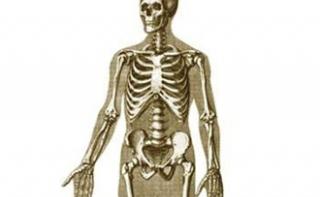 Раскрыта причина болезней костей