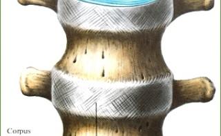Стволовые клетки избавят человека от болей в спине
