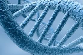 Описаны биомаркеры, указывающие на эффективность при опухолях антител к белку PD-L1