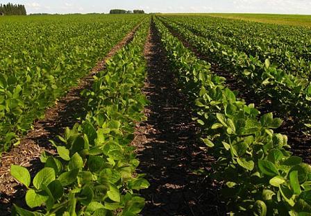 Современные решения для посадки и выращивания лучшего урожая