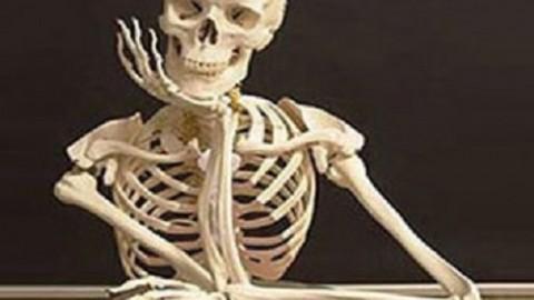 Найден способ простого восстановления костей