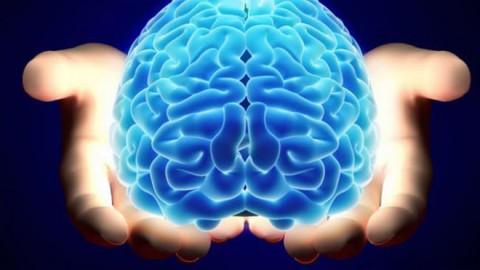 Стало известно, от чего зависит старение человеческого мозга