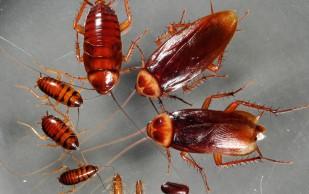 Комбат средство от тараканов