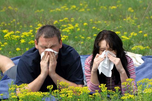 Как лечить аллергию?