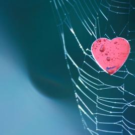 Сердечная ткань из паутины