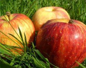 Яблоки защитят организм от остеопороза