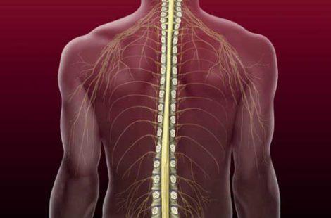 Восстановление и реабилитация после компрессионного перелома позвоночника… разъясняет специалист