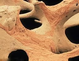 Увеличение дневной нормы потребления кальция не отражается на плотности костной ткани среди пожилых пациентов