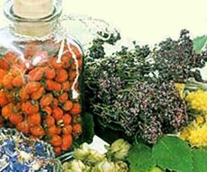 Семена аниса, лимон, мед и алоэ для улучшения слуха