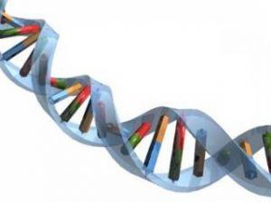 Расшифровка ДНК: семья американцев теперь знает свой генетический код