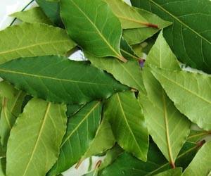 Лавровый лист, каштан и зерна ржи против заболеваний суставов