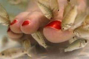 Рыбный педикюр опасен для здоровья?