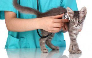 Понос у кошки. Лечение в ветеринарной клинике «Био-Вет»