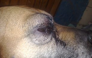 Удаление опухоли у собак в клинике «Био-Вет»