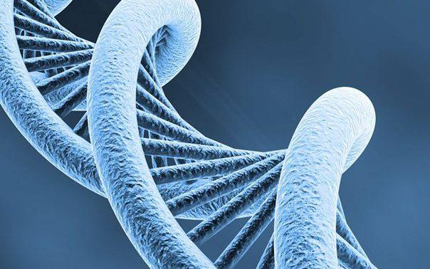 Пептиды и их влияние на организм человека