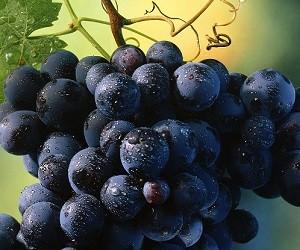 Ягоды, овощи и фрукты для здоровых суставов