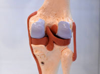 Ученые вырастили новые коленные суставы из носов пациентов
