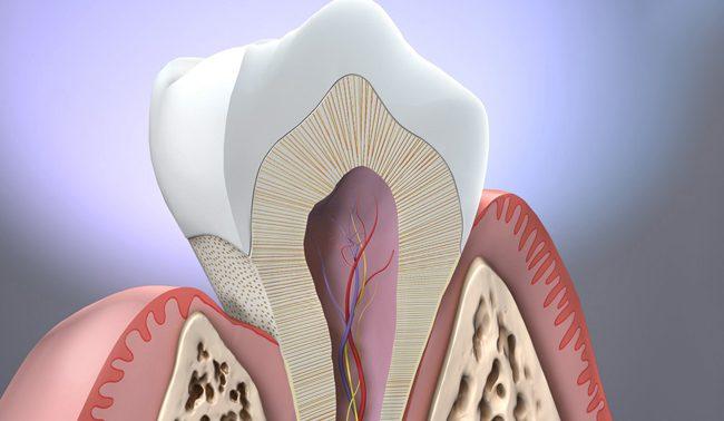 В лечении травм позвоночника будут использовать зубную ткань