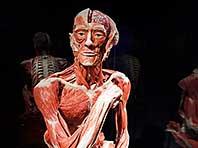 Мышцы человека — секрет к получению целой армии биороботов
