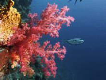 Соединение, полученное из кораллов, переворачивает схему лечения переломов