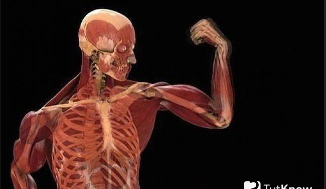 Вибрации укрепляют кости