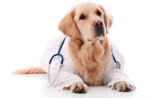Собака поможет спастись от старости?