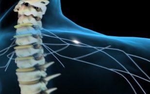 Ученые открыли механизм, позволяющий лечить травмы спинного мозга