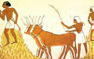 Распространение сельского хозяйства сделало кости людей слабыми