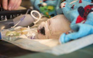 Двух щенков с расщеплением позвоночника вылечили стволовыми клетками