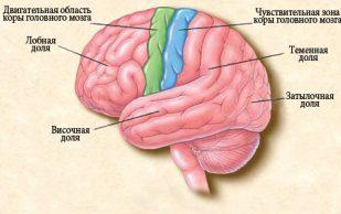 Все об эпилепсии