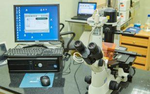 Найдены клетки, отвечающие за появление судорог