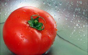 Сочетание помидор и подагры. Можно ли их есть?