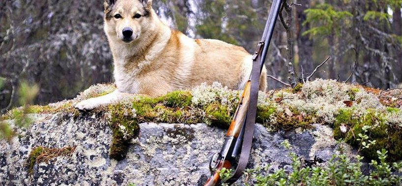 Полезные советы либо, что брать на охоту