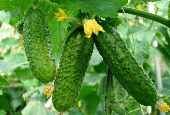 Этот распространенный овощ укрепляет кости
