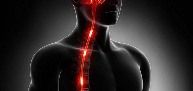 Поврежденный спинной мозг можно быстро восстановить