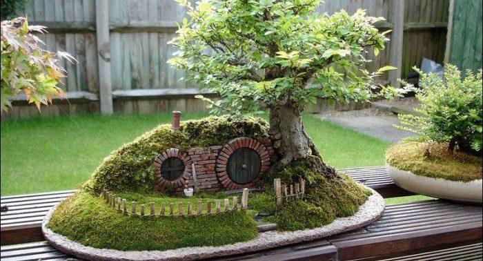 «Бонсай» — миниатюрное дерево у вас дома